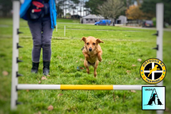 UK Dog Sport